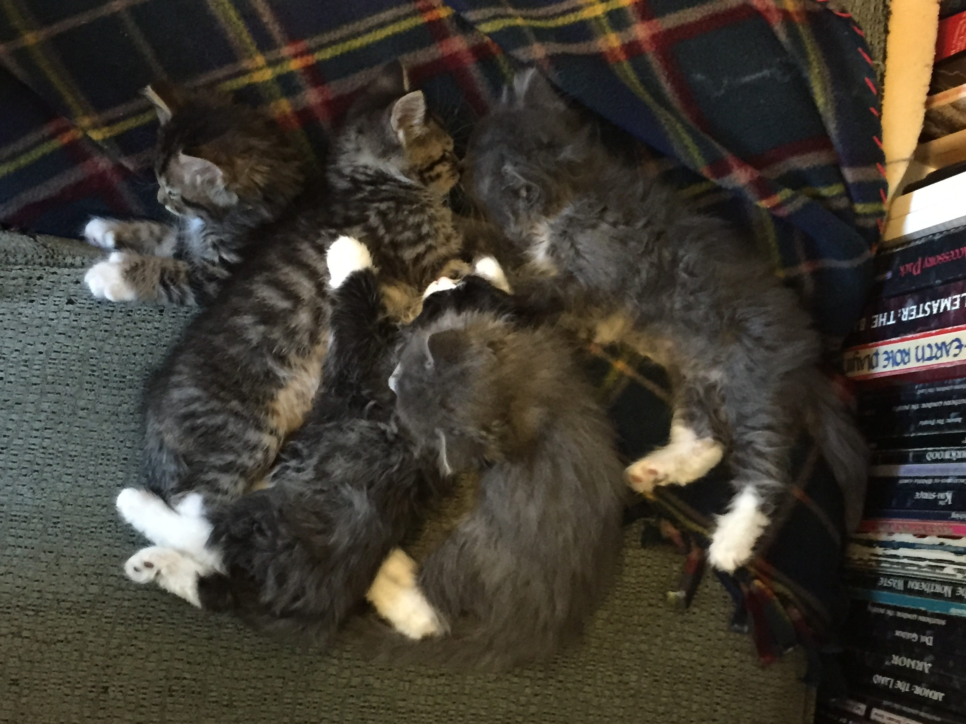 The Puppy Kittens